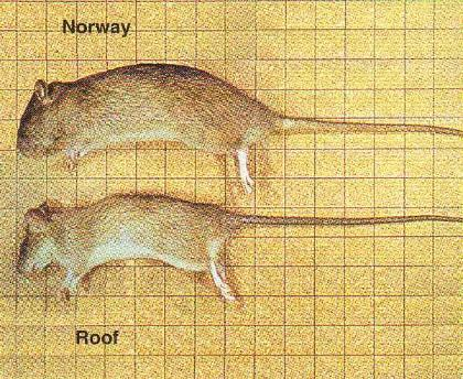 Eagle Pest Control Inc Rodents